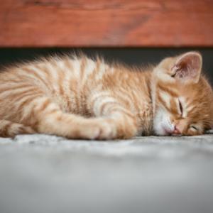 幸福度を上げる睡眠のイメージ画像